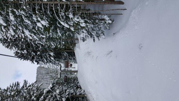 Andalo - Fai della Paganella - Neve spettacolare e super abbondante anche fuori dalle piste ! temperatura perfetta e la neve ha tenuto bene tutto il giorno...persino nelle piste piu basse - © enricopegoraro89