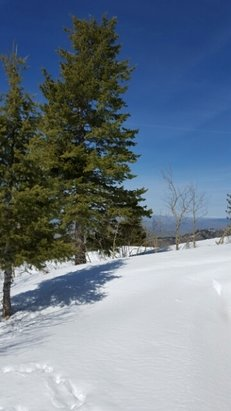 Bogus Basin - mountain closes April 2nd!! get up here and enjoy these spring bluebird days soon! pure beauty!  - © jayme