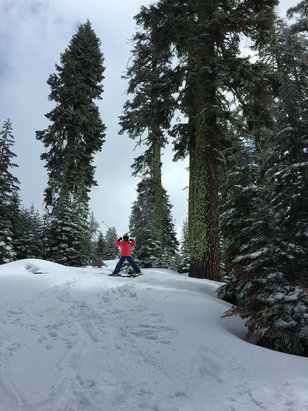 Badger Pass - Gorgeous bluebird day yesterday with several inches of fresh pow. No lines!