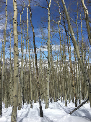 Beaver Creek - Amazing day! Snow is riding nice right now!