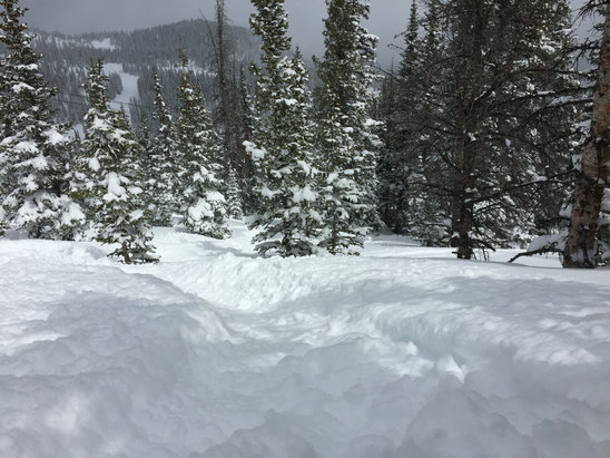 Winter Park Resort - Ridiculously awesome powder conditions...again! Mary Jane trees, the cirque, eagle wind all incredible today... - ©iPhone