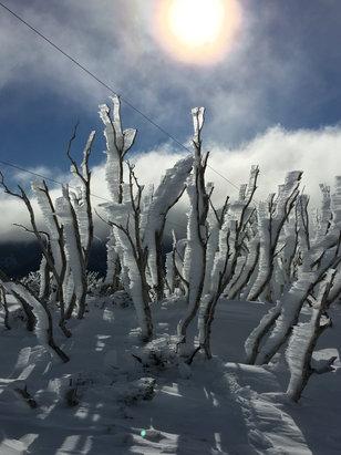 Falls Creek Alpine Resort - [! skireport_firsthandpost_pagetitle ] - © John Kourambas iPhone