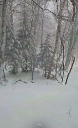 Jay Peak - Amazing day in the trees at Jay Peak!! 12/30 - © anonymous