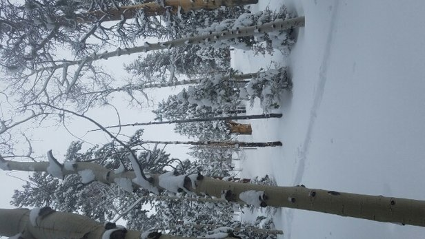 Lee Canyon - It's dumping again folks!  2 to 3 ft over last 2 days, knee deep fresh!  Vegas gets snow! - © Powder Houndz