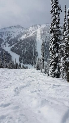 Whitewater Ski Resort - great fun great snow  - © snowhound