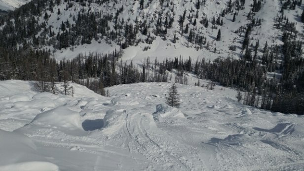 Lake Louise - great day snowed whole the time lots op tree lines where you can find powder .. great year !!!  - © anonymous