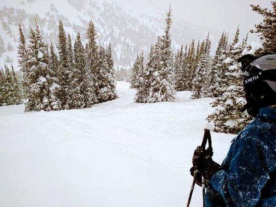 Marmot Basin - Amazing conditions. Fresh powder all day! - ©Todd