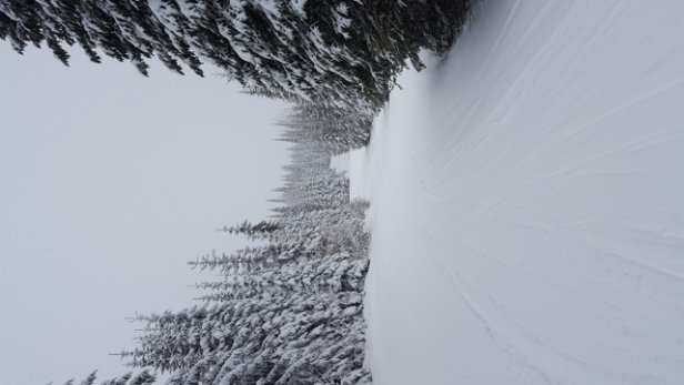 Sun Peaks - excellent snow today.. a bit cloudy - © bravekermit