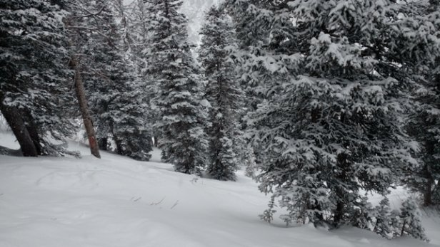 Alta Ski Area - great dump today, you could find some gnarly pow - © gnar gnar