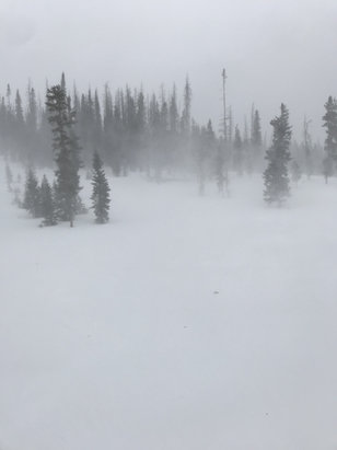 "Wolf Creek Ski Area - 27 inches of fresh pow and lots of downed trees. Yeah, ""snownado! "" If you can make it up this weekend, I would highly recommend it.  - © Will's iPhone"