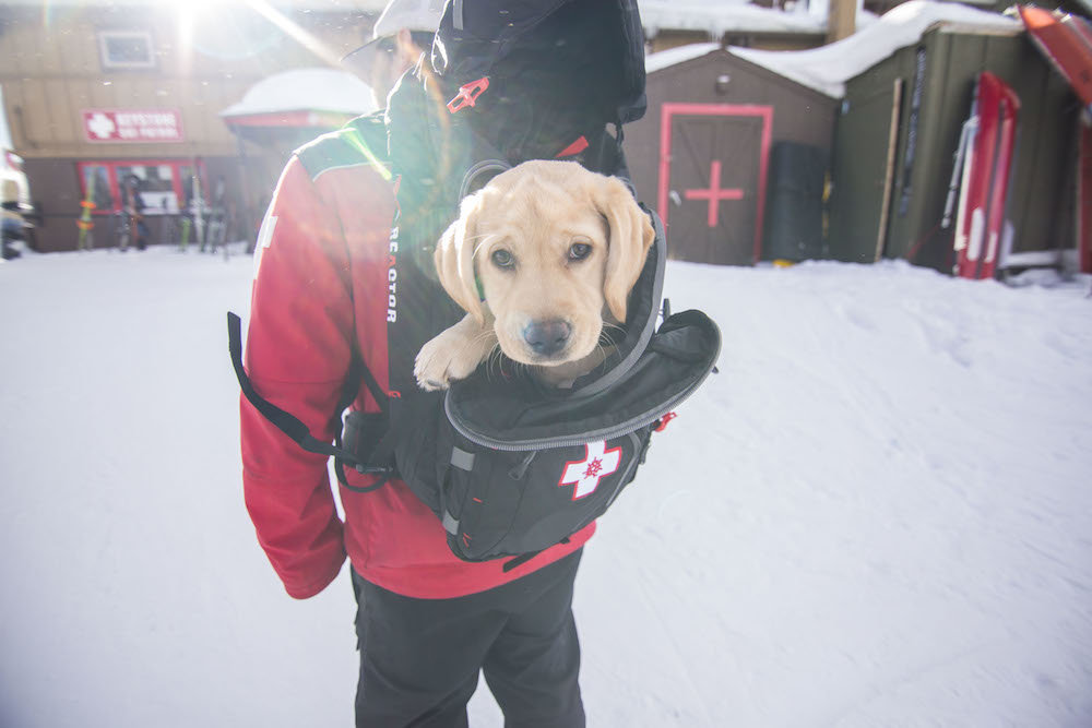 What's the matter, haven't you ever seen a puppy in a pack before? - © Keystone Resort