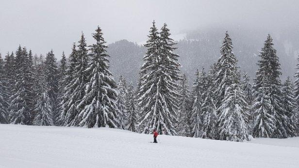 Scheffau - SkiWelt - super schnee - © kejjay