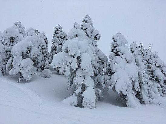 Villard de Lans - Conditions de neige au top, super poudreuse d'environ 20-35 cm au bord des pistes et en hors pistes ! - © skieur