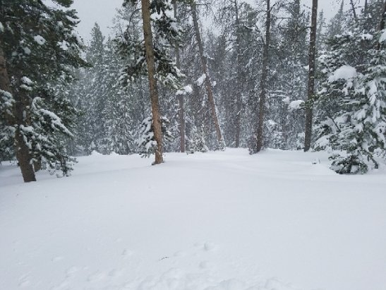 Keystone - amazing! I love keystone! - © tree basher