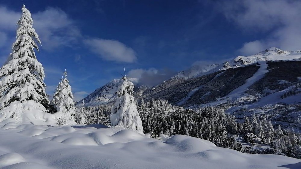 Schneebedeckte Bäume in Cerro Catedral - © Facebook Cerro Catedral
