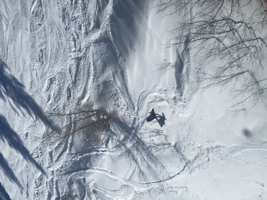 Jackson Hole - Pow pow everywhere!  - © Mooooooose sighting