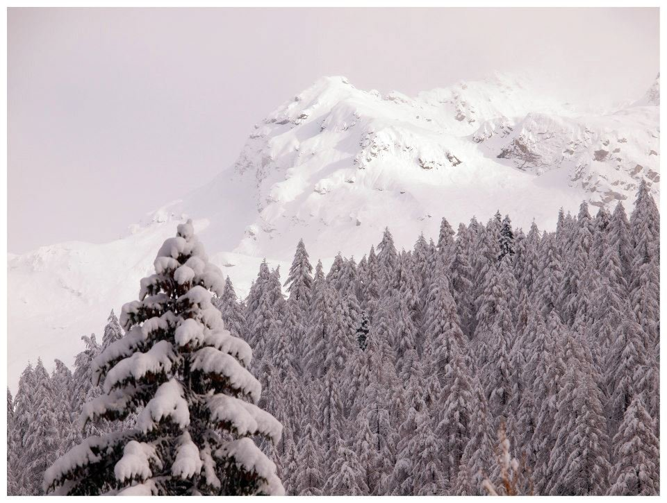 Snowy treetops in Gressoney - Monterosa Ski, Italy. Nov. 29, 2012 - © Arch. Fotografico Monterosa Ski