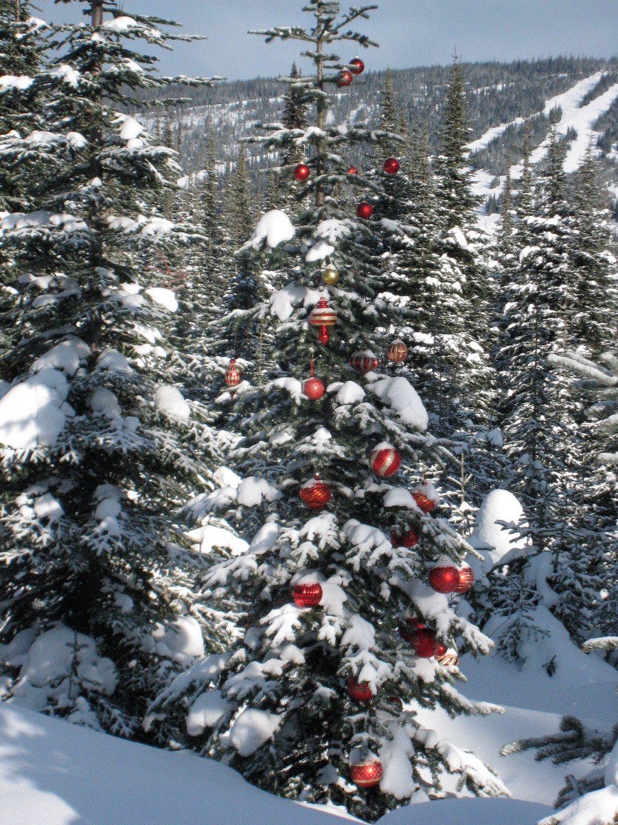 Families decorate trees at Sun Peaks. Photo by Becky Lomax. - © Becky Lomax
