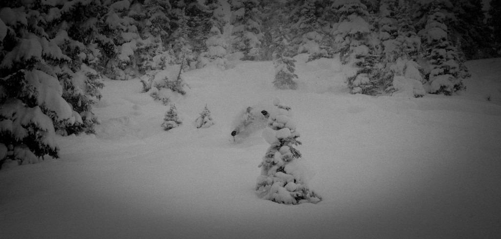 The snow last Saturday was amazing.  - ©Jeff Cricco