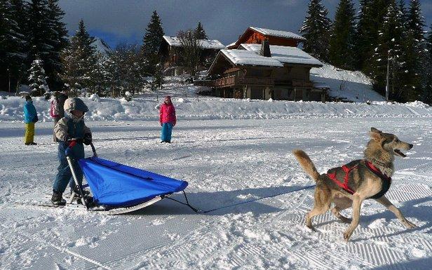 Le Baby Traineau Park : Le coup de coeur de l'hiver à Praz de Lys Sommand