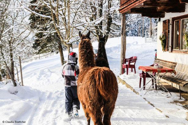 """""""Papa, ich mag heute nicht Skifahren!"""" Die besten Alternativen in der Region Wilder Kaiser ©Claudia Böttcher"""