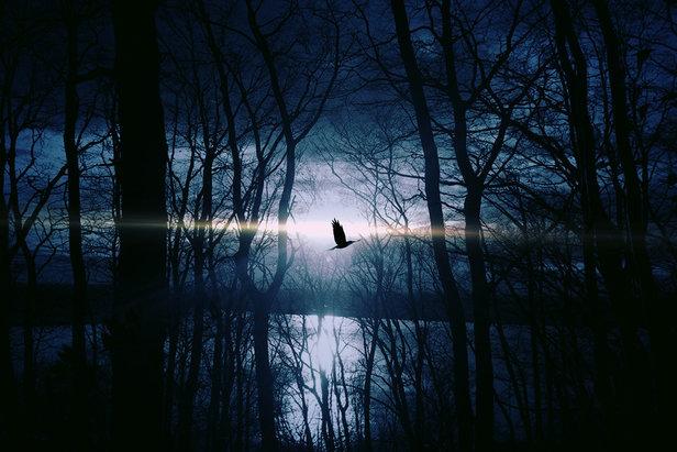 Mystische nächtliche Stimmung im Wald