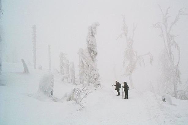 Bavarian Forest 2006