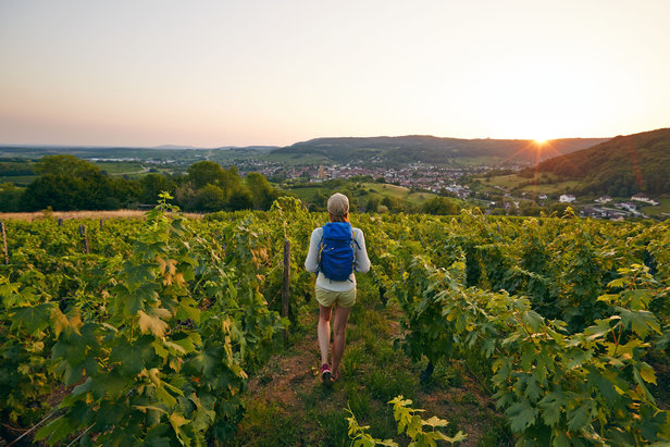 Couleurs d'automne dans les vignes du Jura