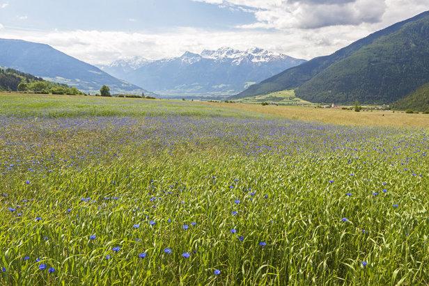 Mals, Malles (Dolina Vinschgau, Val Venosta)  - © IDM Südtirol Frieder Blickle