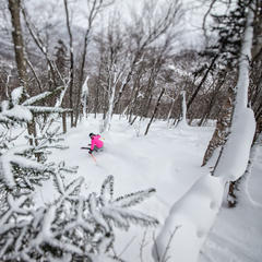 Stowe offers skiing for all abilities. - © Liam Doran