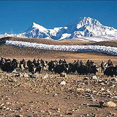 Der Shisha Pangma vom Chinese Basecamp (5.000 m) aus gesehen - © www.amical.de