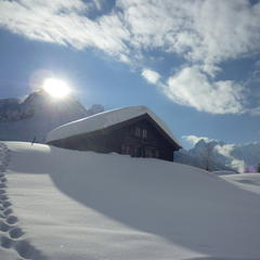 Fresh snow in Chamonix. Jan. 28, 2013 - ©Claire Burnet